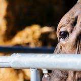 Das Urteil im Prozess, unter anderem wegen Tierquälerei, steht noch aus. (Bild: Kristian Peetz/Getty Images)