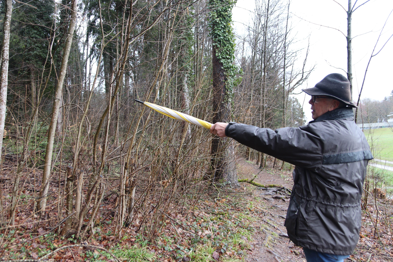 Zurechtgestutzt: Hier wurden viele Sträucher geschnitten, damit der Wald sich nicht über die Grenze ausbreitet.