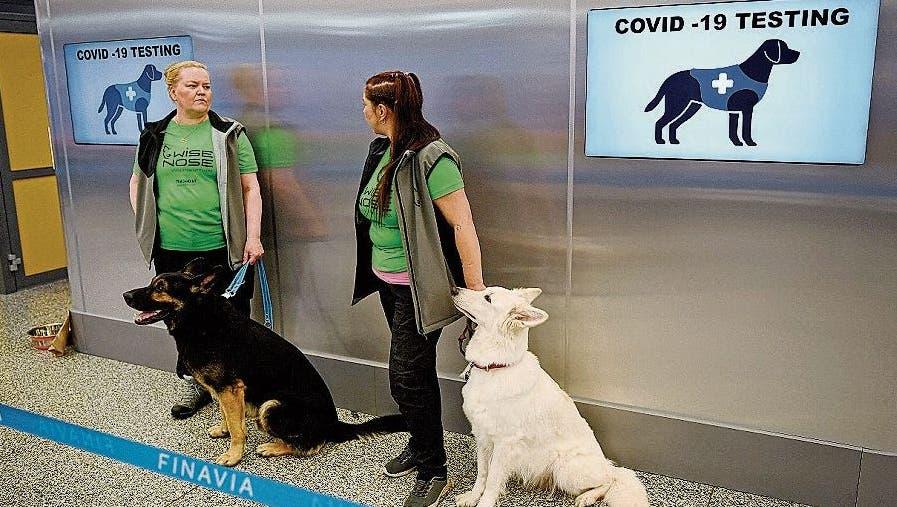 Beim Flughafen in Helsinki stehen Coronaspürhundebereits im Einsatz.