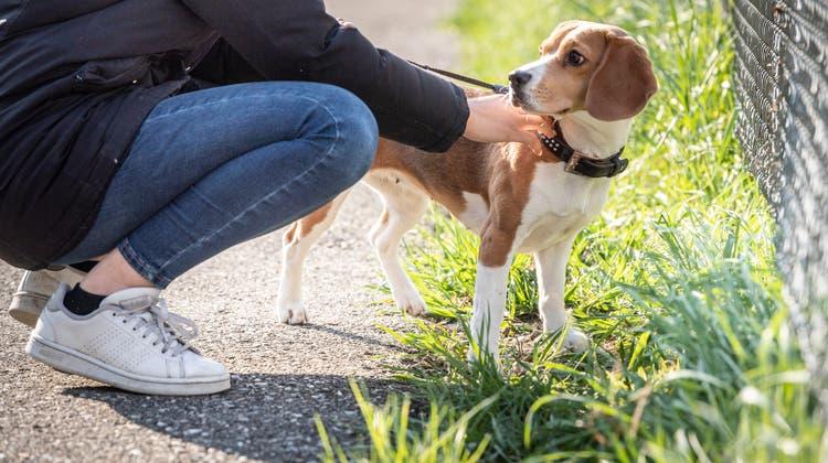 12'000 Vierbeiner mehr leben seit dem Coronajahr in der Schweiz. Dass Hunde nicht nur putzige Begleiter sind, sondern viel Aufwand bedeuten, überlegen sich viele beim Kauf nicht. (Andrea Stalder)