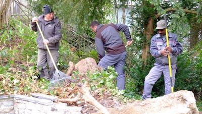 Ein Beispiel aus dem Hause Impuls Zusammenleben: Sozialhilfebezüger arbeiten im Rahmen von «jobwärts»gemeinnützig beim Forst. Sie werden von einem Mentor ehrenamtlich begleitet. (Rahel Plüss / WYS)