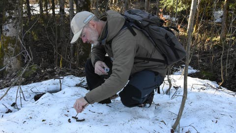 Wildhüter Urs Büchler hat eine vermeintliche Auerhuhn-Losung gefunden. (Bild: Urs M. Hemm)
