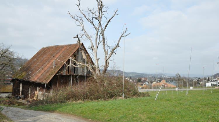 Sie bleibt erhalten: Die Scheune an der Steingassesoll zum Gemeinschaftsraum des «Rebberg Village» umgebaut werden. (Nathalie Wolgensinger)