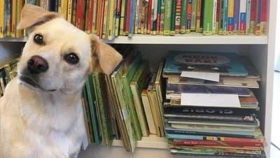 Riva ist die Hauptdarstellerin der neuen Aktion «Nur für Hundeohren». (zVg)