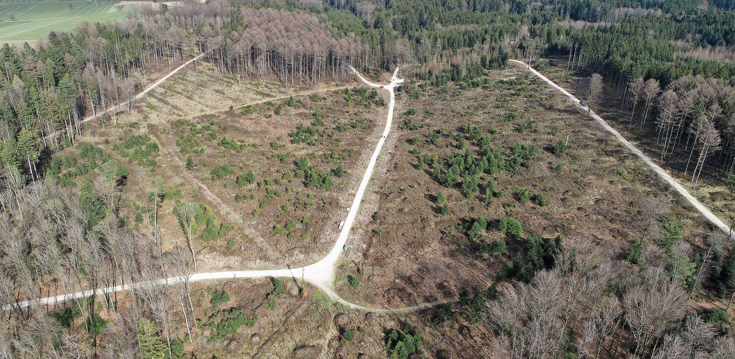 Im Januar 2018 hat im Kestenholzer Wald der Sturm Burglind gewütet. Fichten sind fast keine mehr übrig. Wo nötig, wurden Jungbäume gepflanzt. Darunter zum Beispiel Lärchen.