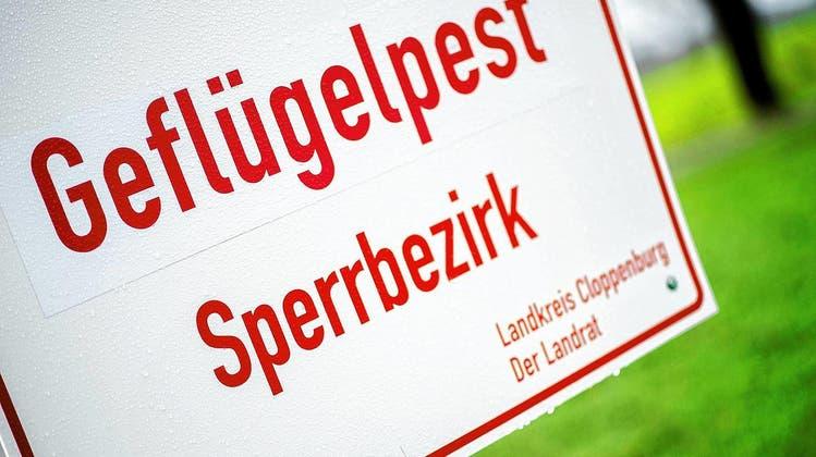 Ein Schild mit der Aufschrift «Geflügelpest Sperrbezirk» (Symbolbild). Die Geflügelpest breitet sich im Kreis Waldshut rasend schnell aus. (Hauke-Christian Dittrich/dpa)