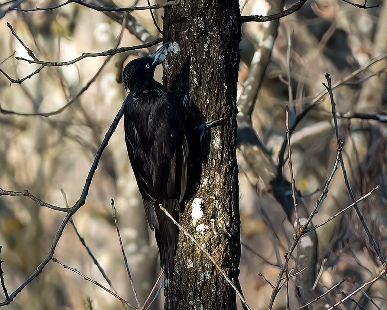 Vögel sind das Lieblingsmotiv der Hobbyfotografin.