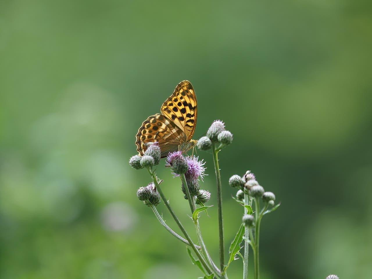 Motive, die ihr imponieren, lichtet sie ab, wie zum Beispiel diesen Schmetterling.