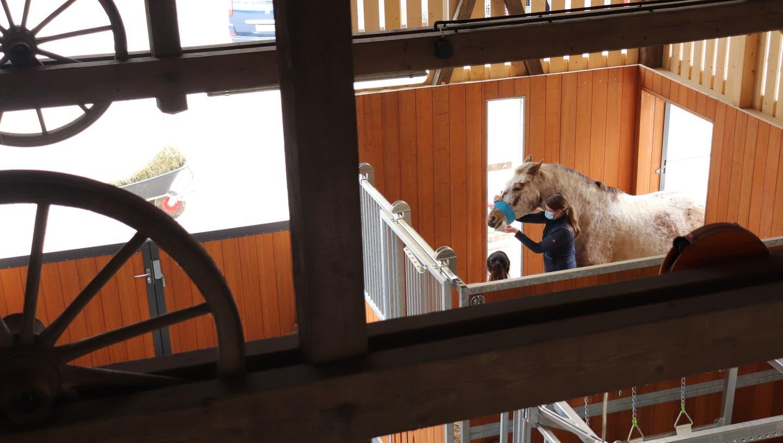Stallmeisterin Sanja Leuenberger ist Bauleiterin des Neubaus mit fünf mobilen Operationsräumen der Tierklinik 24, die sie und ihr Mann Hansjakob Leuenberger führen. (Flurina Dünki)