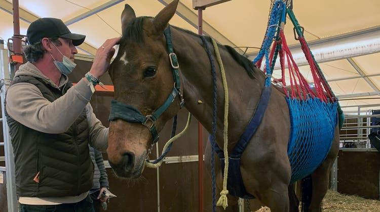 Der deutsche Springreiter Mike-Patrick Leichle mit seinem Pferd, das nur noch mit Hilfe der selbstgebastelten Konstruktion stehen konnte. Leider hat das Pferd den Kampf gegen das Virus verloren. (Acp Andreas Pantel)