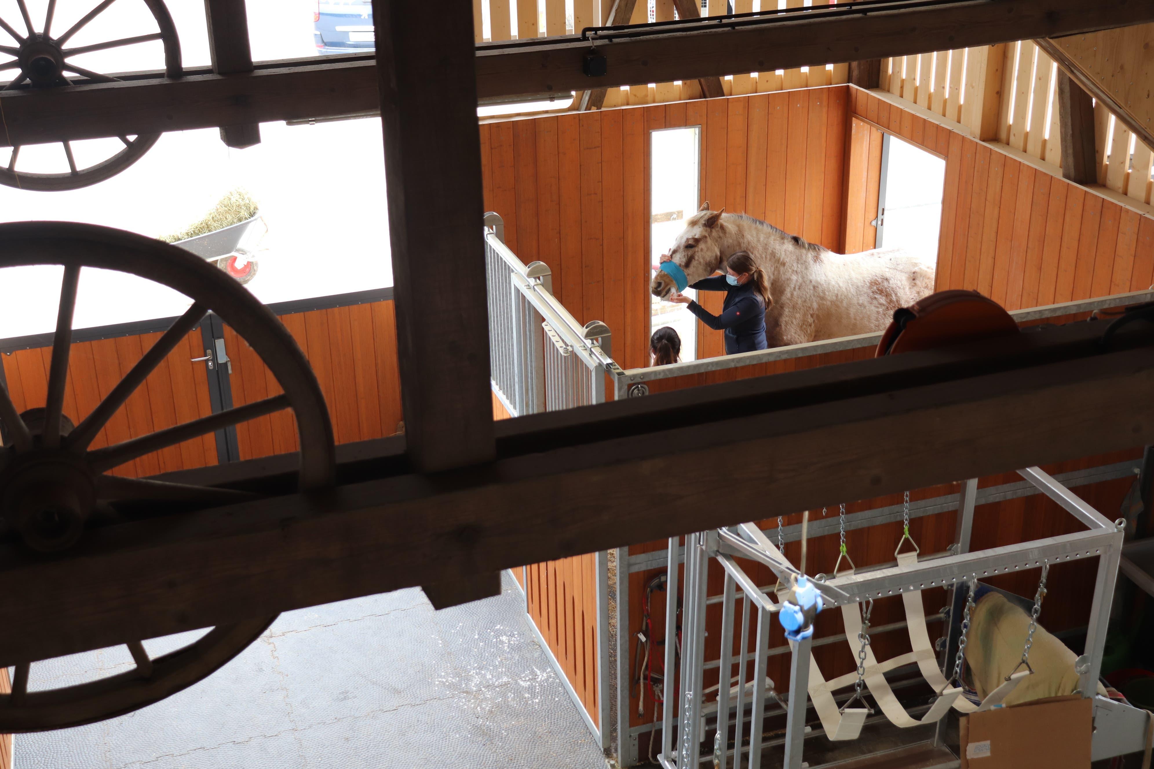Stallmeisterin Sanja Leuenberger ist Bauleiterin des Neubaus mit fünf mobilen Operationsräumen der Tierklinik 24, die sie und ihr Mann Hansjakob Leuenberger führen.