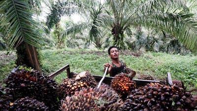Im Abstimmungskampf drehte sich fast alles ums Palmöl. (Bild: Getty)