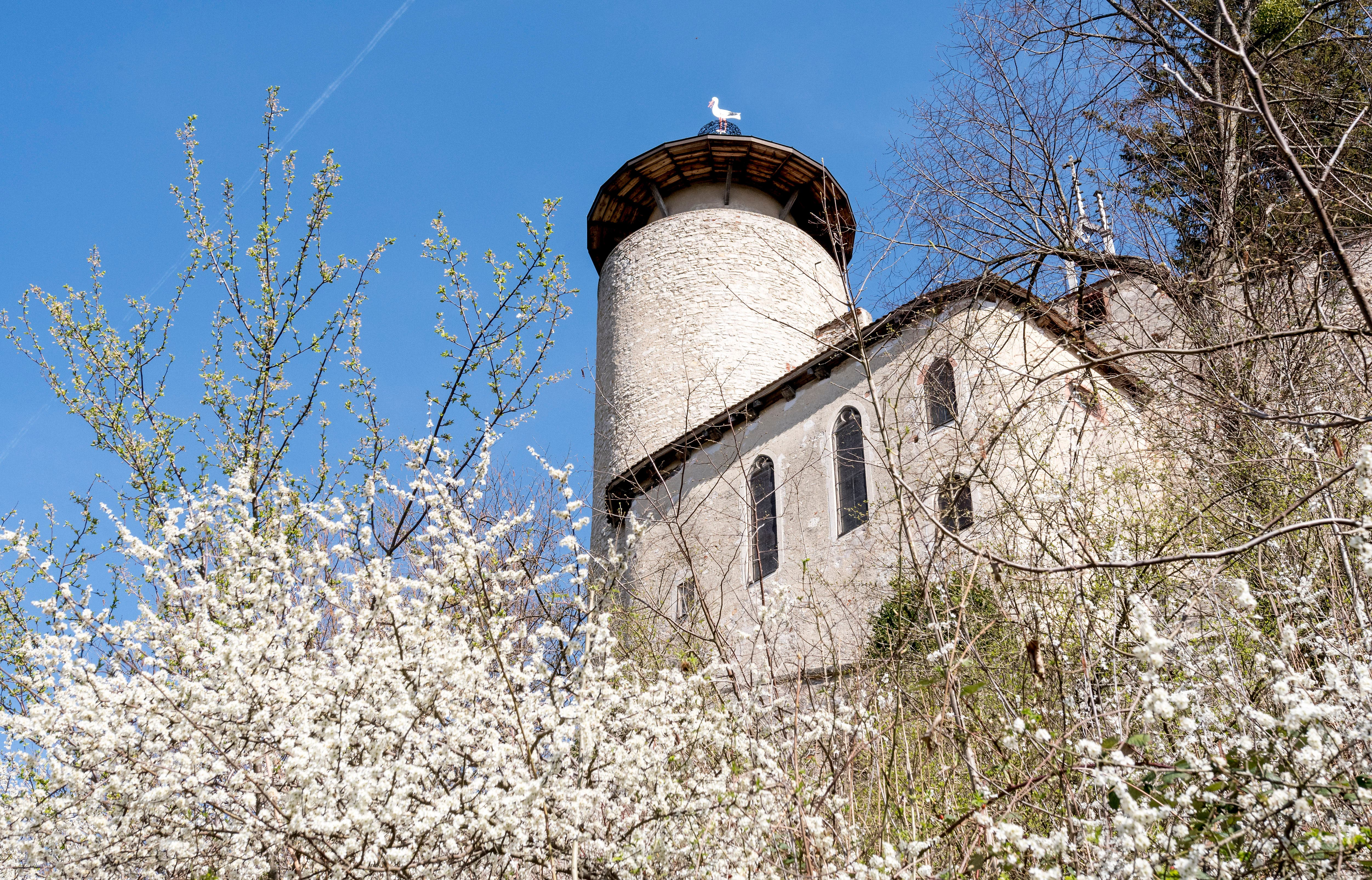 Rund um die Ruine Birseck wuchern Sträucher und Bäume. Hier muss zwischen Gartengestaltung und Naturschutz abgewogen werden.