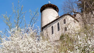 Rund um die Ruine Birseck wuchern Sträucher und Bäume. Hier muss zwischen Gartengestaltung und Naturschutz abgewogen werden. (Nicole Nars-Zimmer)