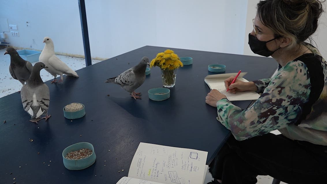 Zwölf Tauben und drei Menschen: Ein Besuch in der gerade eigenartigsten WG Basels