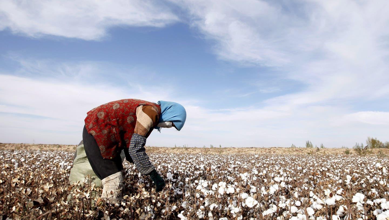 Muslime werden im Westen Chinas verfolgt und versklavt – vor allem auf den Baumwollfeldern und in der Textilindustrie. (Keystone)