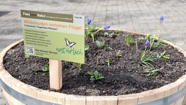 An 18 Standorten werden 23 Pflanzfässeraufgestellt. Auf dem Gemeindehausplatzerfolgt der Startschuss der Aktion «fassbare Natur». (Bild: Horatio Gollin)
