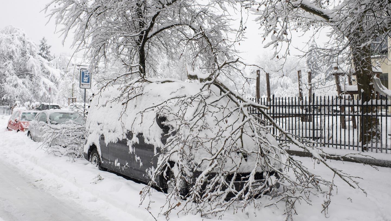 Der nasse Neuschnee belastete die Stadtzürcher Bäume Mitte Januar und führte zu Schäden. (Keystone)