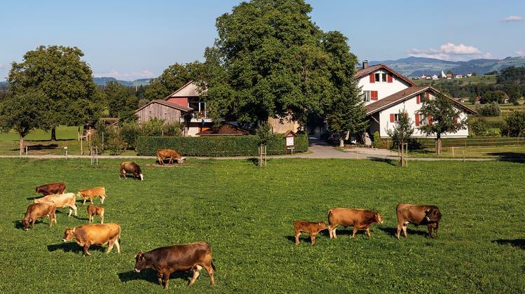 Der Bauernhofin Sins als Erlebnis für die Gäste. (Foto: Jakob Sidler-Wild)