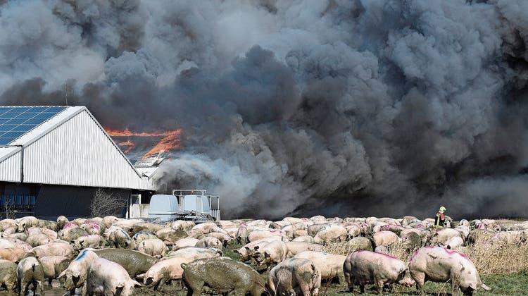 Nur 1300 Schweine überlebten den Brand im deutschen Alt Tellin. Die Anlage brannte fast komplett ab. (Bild: Stefan Sauer/DPA (30. März 2021))