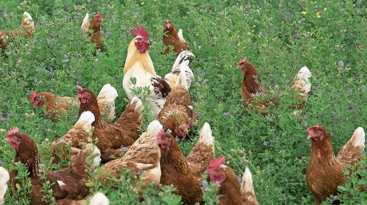 Das Werben um die Biobauern: Bio Suisse sagt Nein zur Trinkwasserinitiative – was das für den Abstimmungskampf bedeutet