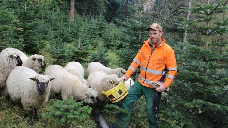 Rolf Treier, Leiter des Forstbetriebs Homberg-Schenkenberg, verzeichnet etwa 2000 Kubikmeter Schadholz. (Dennis Kalt (20. November 2019))