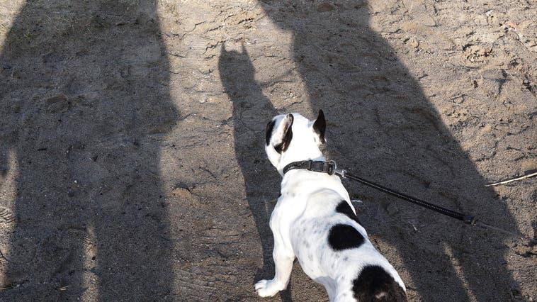 Vierbeiner wurden zu Statisten: Zwei Hundehalter beschimpften und bedrohten sich so lange, bis die Polizei einschreiten musste. (Symbolbild:imago-images.de)