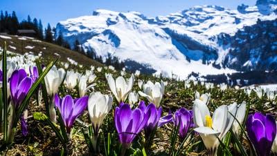 LZ-Quiz #54: Wie gut kennen Sie sich mit Frühjahrs-Pflanzen aus?