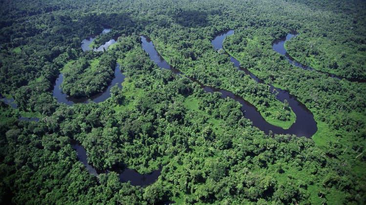 In Sibirien, im Kongobecken, in der Sahara oder im südamerikanischen Regenwald (Bild) finden sich noch Residuen «ökologischer Intaktheit». (planet-wissen)