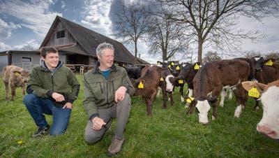 Biolandwirt Christof Widmer – hier mit seinem Sohn Zeno vor ihrer Kuhherde – befürwortet sowohl die Pestizid- als auch die Trinkwasserinitiative. (Bild: Pius Amrein  (Sempach, 19. April 2021))