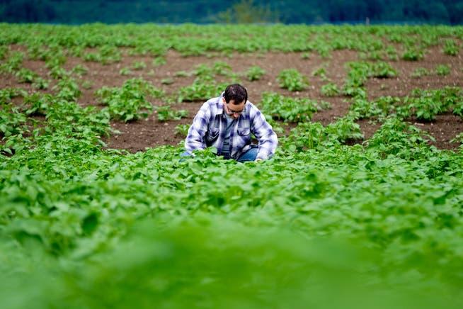 Im März 2016 hatte Hagenbuch Pech. Der Bauer begutachtete das vom viel Regen stark beschädigte Feld. Viele Kartoffeln sind verfault.