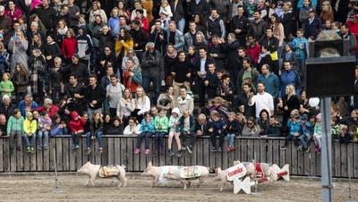 Die Olma soll im Herbst 2021 stattfinden können. Die Veranstalter begrüssen einen beschränkten Zugang mit Impfausweis. (Bild: Gian Ehrenzeller / Keystone)