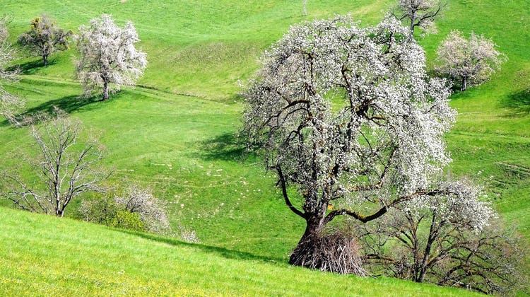 Der Frühling im Aargau in Bildern – das sind die schönsten Leserfotos