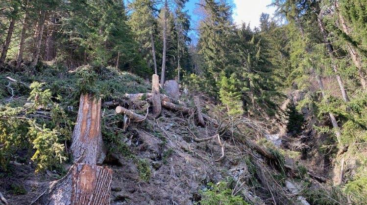 Ein 24-jähriger Forstwart starb infolge eines Arbeitsunfallsim Gemeindegebiet von Ernen. (Kapo VS)