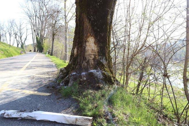 Leitpfosten und Baum wurden beim Selbstunfall ebenfalls stark in Mitleidenschaft gezogen.