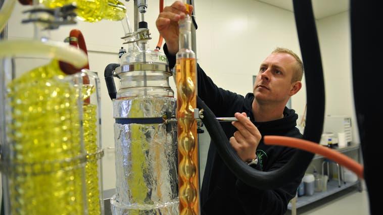 Mitchel Monckton in seinem Hanflabor: Das Gerät für die Destillation ist ein Hingucker. (Bilder: Urs Hanhart (Seedorf, 15. April 2021))