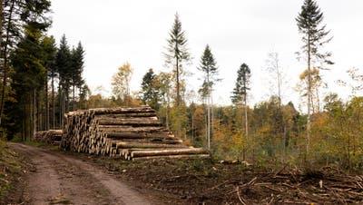 Der verunfallte Forstarbeiter erlag drei Tage nach dem Unfall seinen Verletzungen. Er wurde nur 23 Jahre alt. (Bild: Severin Bigler)