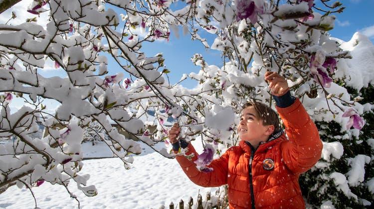 Auf der Rigi Scheidegg liegt viel Schnee. (Screenshot Webcam)