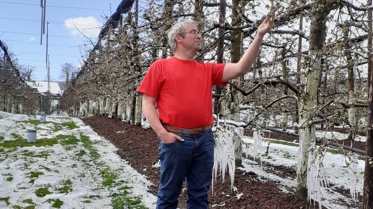 Weisse Blüten und Eiszapfen an den Kirschbäumen von Othmar Strebel. (zVg)