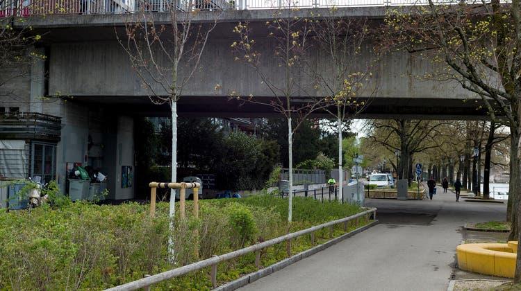 In den vergangenen Tagen wurden die Stämme von rund 200 Jungbäumen in Basel– wie hier etwa am Kleinbasler Rheinbord– mit weisser Farbe bemalt. (Kenneth Nars)