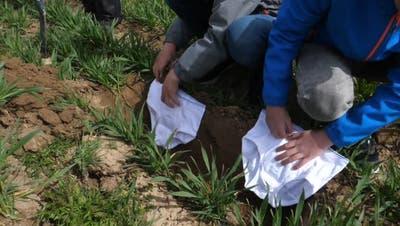 Als Beweisstück: Hunderte Schweizer vergraben Unterhosen in ihrem Garten