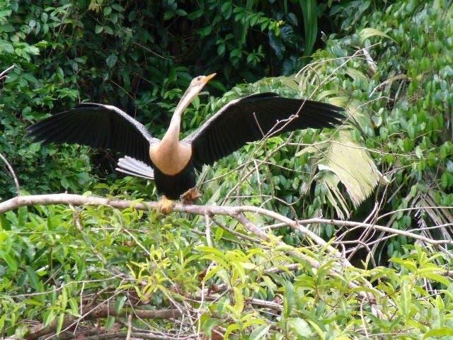 Nicole Schmid aus Brugg ist nach Costa Rica ausgewandert.