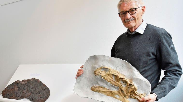 Beat Imhof mit einem Exponat des ersten komplett ausgegrabenen Dinosaurierskelett in der Schweiz. (Bruno Kissling)