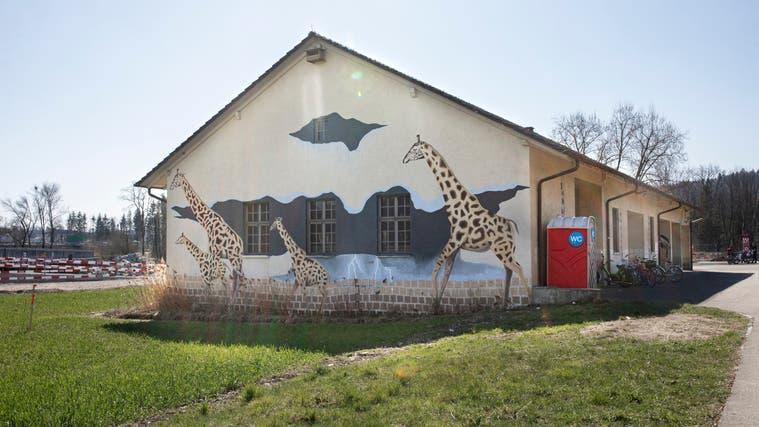 Theo Büchli hat als Berufsschullehrer für Maler und Malerinnen1998 gemeinsam mit seinen Schülerinnen und Schüler40 Tiere auf das Gebäude beim Stauwehr Schönenwerd gemalt . (Britta Gut)