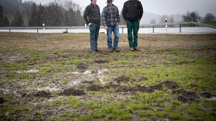 Die Landwirte Roman Jung, Richard Brändle und Martin Künzli (von links) beraten im März auf einer von den Mäusen arg zugerichteten Wiese. Sie nehmen am Programm der Ökokommission der Gemeinde Kirchberg teil. (Bild: Ralph Ribi)