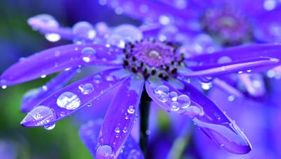 Verregneter Frühling: Wie schon im April ist das Wetter auch im Mai deutlich kälter als in anderen Jahren. (DPA)