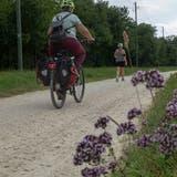 Verbesserungswürdig: Der Veloweg Richtung Hägendorf besteht nur aus einem Mergelbelag. (Markus Capirone)