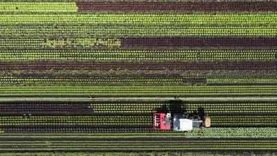 Die Gemeinde Meierskappel hat 32 Bauernhöfe – und einen tieferen Bioanteil als die Schweiz
