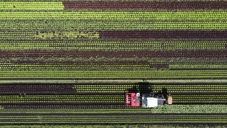 Die Gemeinde Brunegg hat vier Bauernhöfe – und einen grösseren Bioanteil als die Schweiz