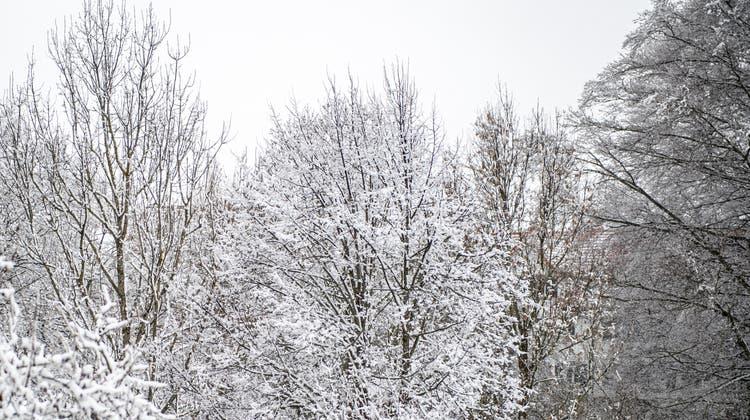 «Und da kommt das gute alte Eskimovolk wieder ins Spiel. Dieses kennt, so ist häufig zu lesen und zu hören, eine Vielzahl von Wörtern für Schnee.» (Arthur Gamsa)